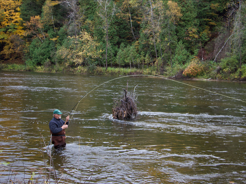 Migratory fish muskegon river fly shop for Muskegon river fishing